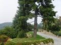 giardino16