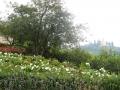 giardino21