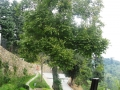giardino22