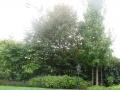 giardino38