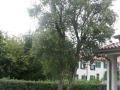 giardino44