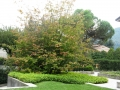 giardino47